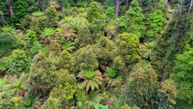 Rainforest in East Gippsland.