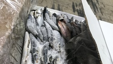 59 kilograms of cocaine was seized by AFP officers, after it was discovered concealed in two shipping containers of frozen fish from Peru.