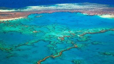 Australian small businesses serving the Great Barrier Reef could do with some of the tourism money currently going overseas.