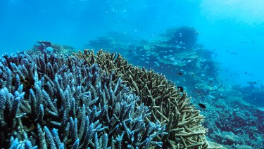 Under stress: Great Barrier Reef corals face multiple threats, especially from climate change.