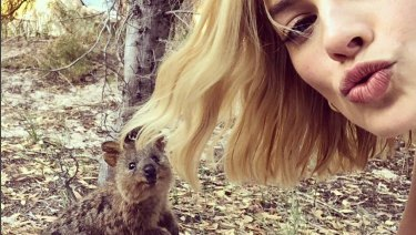 Margot Robbie's quokka selfie has attracted close to 2 million 'likes'.