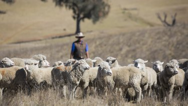 George Hamilton sells his lamb to consumers through his business Farmer George.