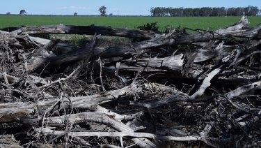 Land clearing near Croppa Creek, near where government compliance officer Glenn Turner was shot dead by farmer Ian Turnbull in 2014.