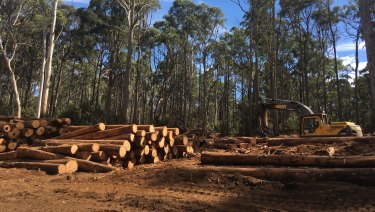 Only a minority of wood comes from native forests but environmental groups would like to see it phased out altogether.
