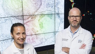 <p>Professor Benjamin Kile and Dr Kate McArthur have photographed for the first time a possible trigger for autoimmune disease.