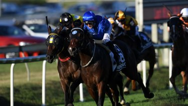 Farewell tour: Impending steams home to win the Stradbroke at Doomben last year