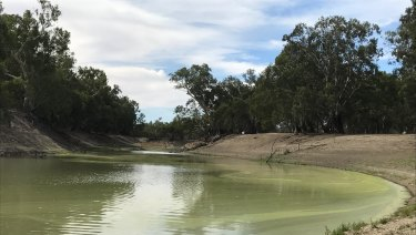 The Darling River is barely flowing south of Menindee Lakes. (The photo was taken on February 18 this year.)
