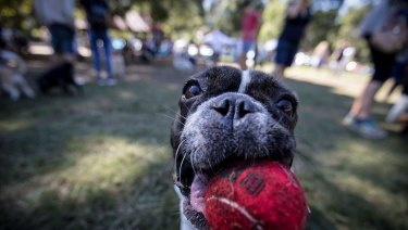 Mad Paws has hosted Australia's largest dog party.