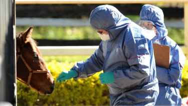 Biosecurity officers take a swab from a horse at the Redlands Veterinary Clinic, east of Brisbane.
