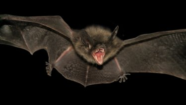 The outbreak is thought to be spread by fruit bats.