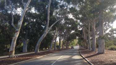 The Honour Avenues are a much loved feature of Kings Park.