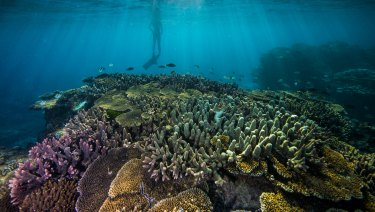 Federal government funding to improve reef water quality has declined, figures show.