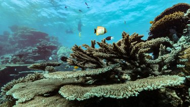 Reef at risk: visitors can find ruin or abundance, depending on where they go.