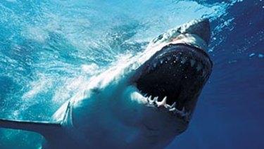 Around 5500 great white sharks inhabit east coast waters to New Zealand, CSIRO research says.