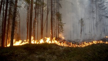 A wildfire burns in Karbole, outside Ljusdal, Sweden, on Sunday.