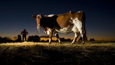 Australia produces about 40 million litres of organic milk annually.