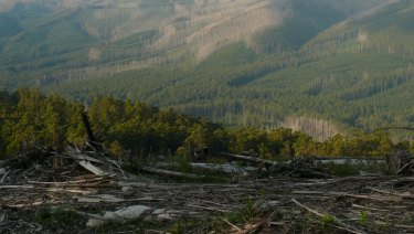Professor David Lindenmayer and Dr Chloe Sato say the forest has lost the ability to sustain itself.