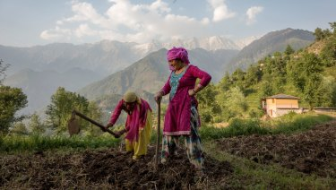 Women prepare a field for sowing corn in Dharmsala, India.