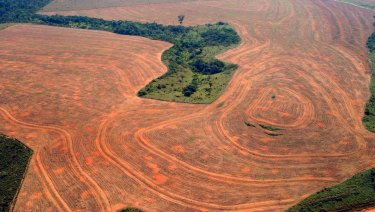 Aerial view of an area deforested by soybean farmers in Novo Progreso, Para, Brazil, in 2004.