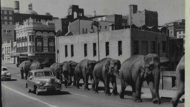 Bullen Bros elephants cross the bridge in 1958.