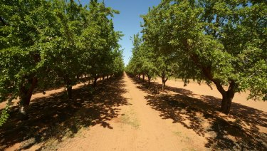 Almond prices look set to rise.