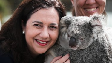 Premier Annastacia Palaszczuk spent the morning of her second-last day of campaigning cuddling a koala at Australia Zoo.