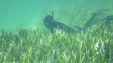 Shark Bay was home to about 4000 square-kilometres of seagrass meadows, one of the world's largest areas.