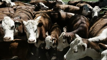 Big changes are coming to the cattle industry.