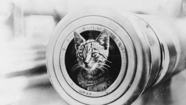 Red Lead, the ship's cat, on board HMAS Perth. She died with the boat.