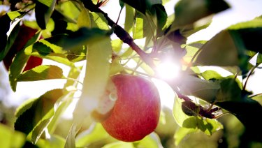 Orchard jobs should be among the best in the country.