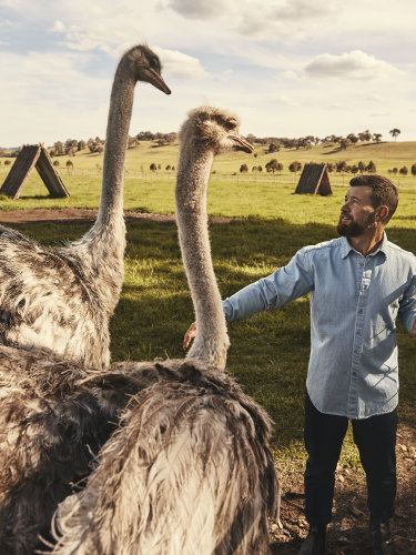 Michael Booth with Rosedale's colour co-ordinated ostriches.