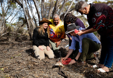 Tali Moyle (left), a wildlife ecologist with the Australian Wildlife Conservancy, looks as Environment Minister Matt Kean releases a numbat. Also watching on are Barkandji Traditional Owners (left to right), Warren Clark, Betty Pearce and Kathy Potter.