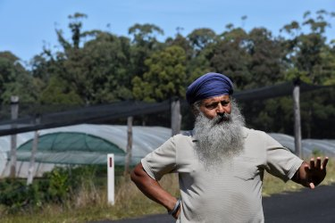 Iqbal Singh Grewal, the owner of a 4-hectare blueberry farm near Sandy Beach, north of Coffs Harbour.