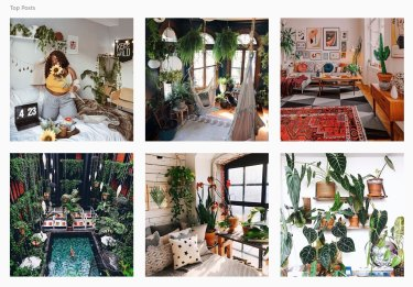 The top #UrbanJungle posts on Instagram.