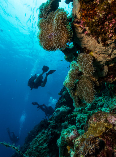The vast majority of experts fear climate change will do irreparable damage to the Great Barrier Reef — soon.
