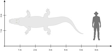 University of Queensland researchers say the 'swamp king' would have grown to at least five metres in length.