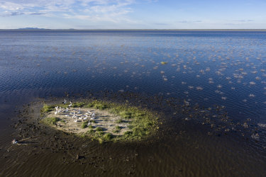 Lake Cowal, the second largest inland freshwater lake in NSW. A global study has found deep waters in temperate lakes have lost almost a fifth of their oxygen levels over the past four decades.