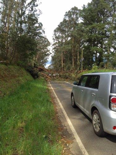 A road blocked by a fallen tree in Kind Lake.