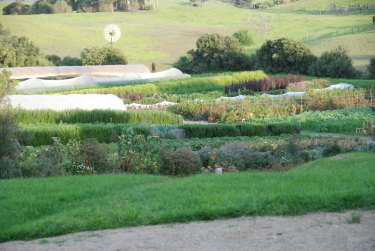 A Transition Farm paddock.