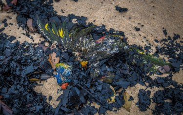 Birds that pershished in the fires washed up on Tip Beach just outside Mallacoota.