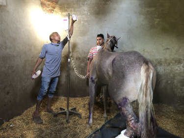Egypt Equine Aid volunteers are treating and feeding horses and donkeys normally used to transport tourists to the pyramids. However, because of the coronavirus pandemic, many animals have been left to starve.