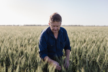 """""""The world is crying out for our grain at the moment,"""" says northern NSW farmer Matthew Madden."""