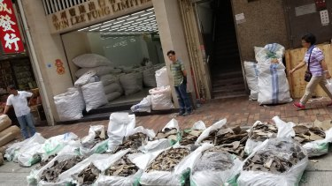Sacks of shark fins found in Hong Kong.