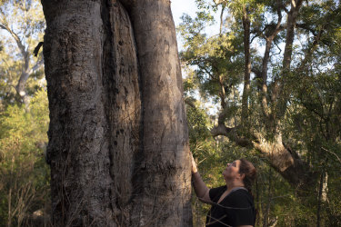 Gundungurra Traditional Owner Kazan Brown with a scar tree on land that will be inundated by floodwater at Burnt Flat by the raising of the Warragamba Dam Wall.