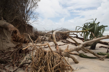Trees left uprooted on Byron's Main Beach on Tuesday as the recent storms and high tides receded.