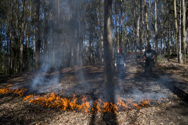 Cultural burning reduces the fuel load and ignites the seedbank held in the ground, according to Indigenous elder Sonny Timbery.