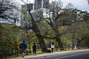 Parramatta Park is one of Sydney's green spaces that will be managed by the new parklands agency.