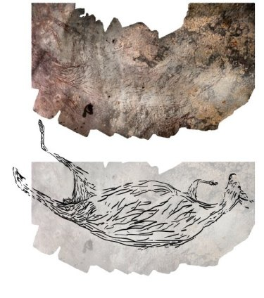 A montage of 39 photographs of the 17,300 year old kangaroo with an accompanying illustration