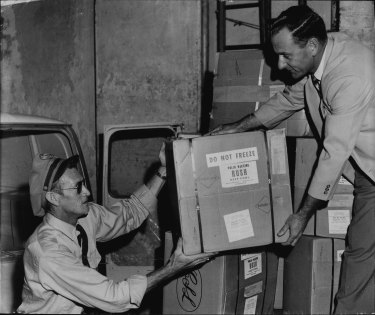 Jim Pate, of Kingsford (air flight driver for Ansett-A.N.A.) delivers the new quadruple antigen for immunization against whooping cough, tetanus, diphtheria and polio to the Commonwealth Health Department, city. He rushed it from Mascot. Taking delivery (right) is Mr. M. Morrison, of Ryde, a senior clerk of the public vaccination campaign. It was packed in ice for its trip from Melbourne. The first injections will be given tomorrow. February 22, 1961.