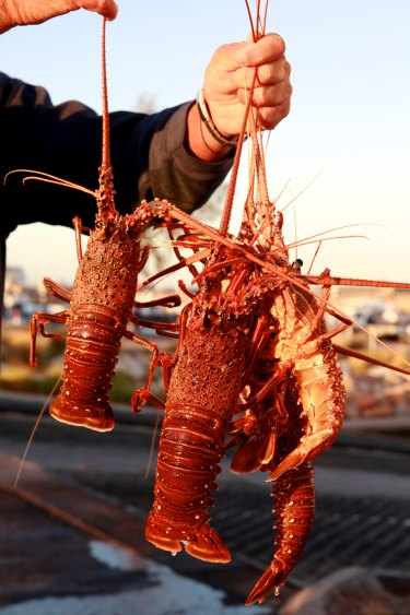 The West Australian rock lobster industry cannot supply its vital Chinese market due to issues surrounding the coronavirus outbreak.